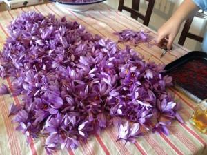 gite-la-tribe-the-Dadet-saffron-cheniers